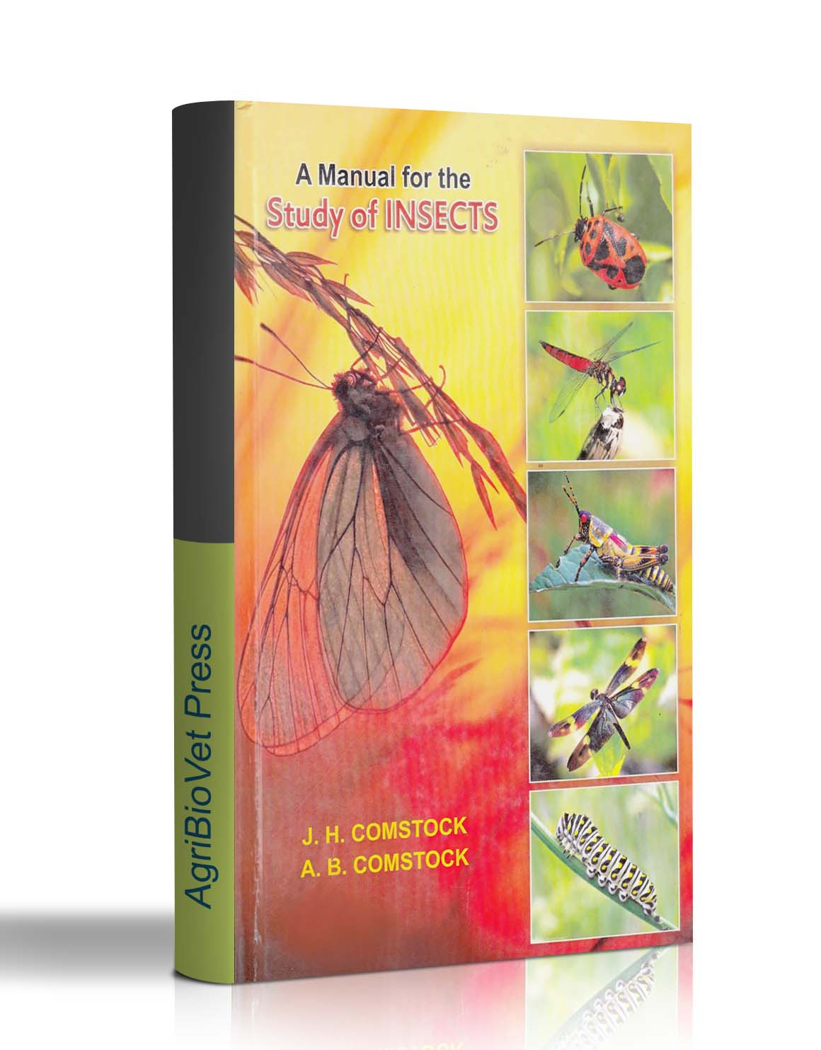 A Manual for the study insects by comstock